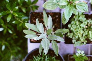 naturopatía puebla wilbing
